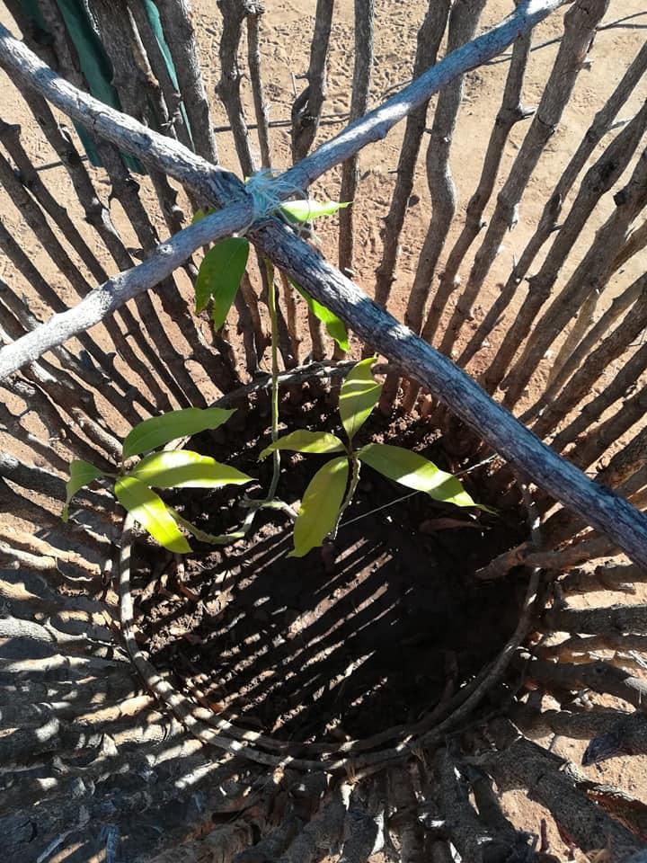 coltivazione piantine Aldeia